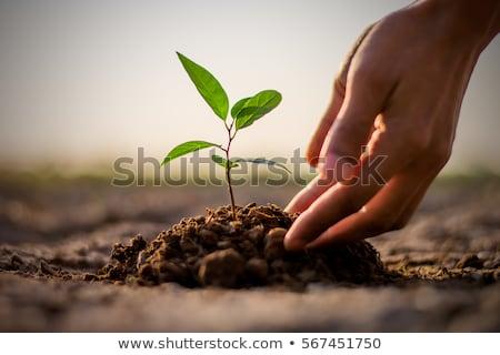 女性 · 手 · 小さな · 工場 · 土壌 · 生態学 - ストックフォト © fotovika