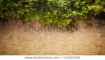 Background design with brown rocks Stock photo © bluering