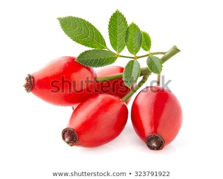 ストックフォト: 赤いバラ · ヒップ · バラ · ヒップ · 詳細 · 冬