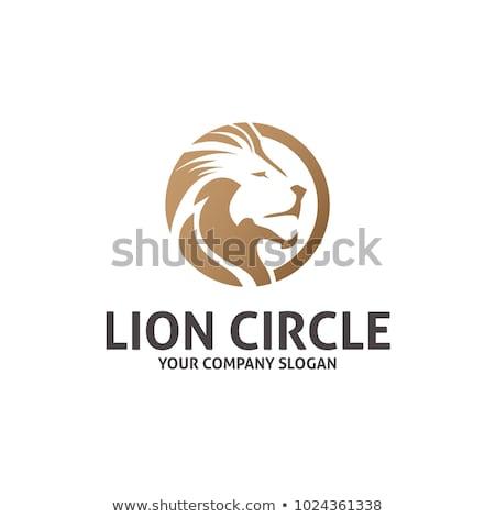 Leão logotipo vetor preto mascote cabeça Foto stock © Andrei_