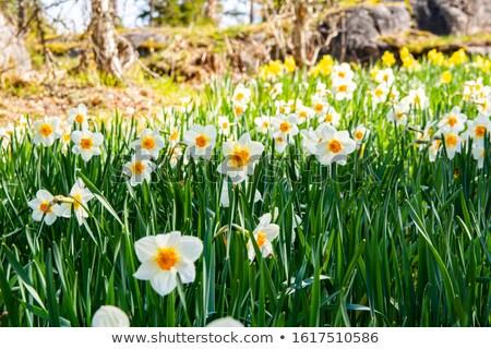 весны Финляндия красивой парка Солнечный день Сток-фото © Estea
