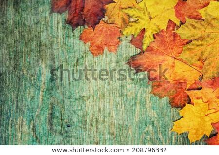 Autumn leaves on the grunge wooden cyan desk Stock photo © Valeriy