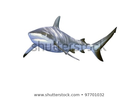 Branco cinza tubarão pequeno forma peixe Foto stock © artjazz