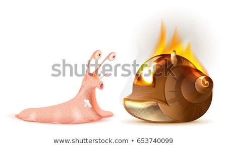 caracol · casa · amor · imóveis · desenho · animado · alegria - foto stock © orensila