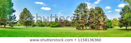 Summer park panorama Stock photo © ixstudio