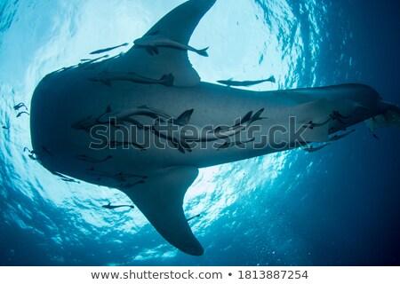 katil · çift · atlama · dışarı · su · balık - stok fotoğraf © adrenalina