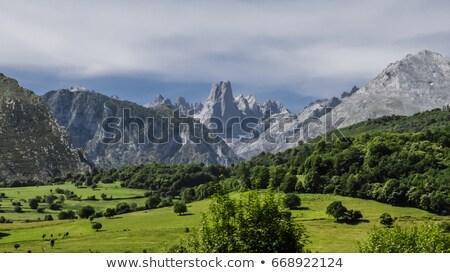 Szczyt chmury drzew zielone góry parku Zdjęcia stock © lunamarina