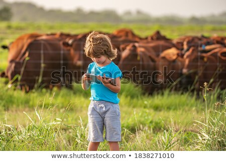 коров пастбище глядя небе природы корова Сток-фото © tilo