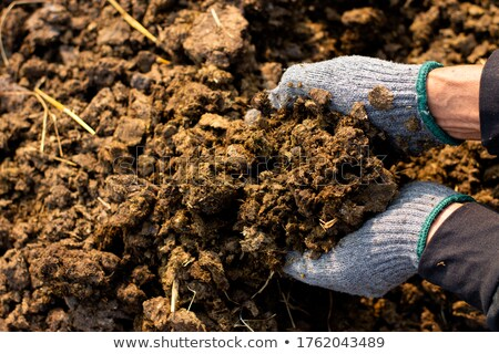 Stock photo: manure