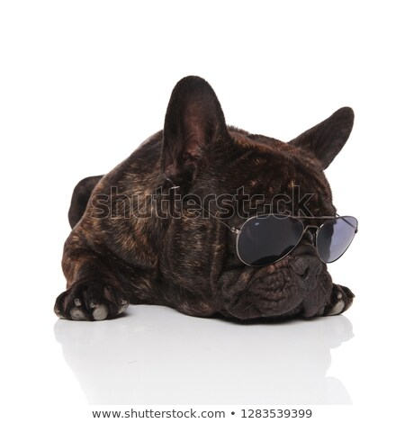 cute french bulldog with eyeglasses rests and looks to side Stock photo © feedough