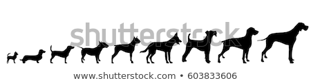 Stock fotó: Fekete · kutya · sziluett · vektor · kutyaféle · állat