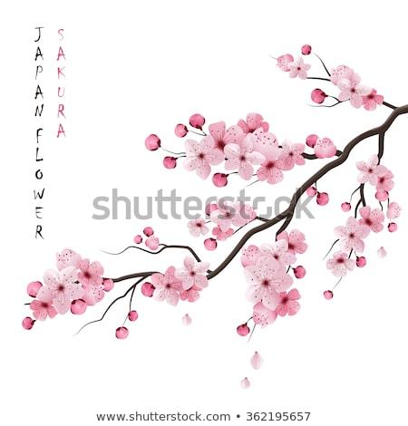 Ayarlamak sakura Japonya kiraz gerçekçi şube Stok fotoğraf © netkov1