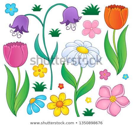 Foto stock: Flores · da · primavera · conjunto · flores · primavera · folha · beleza