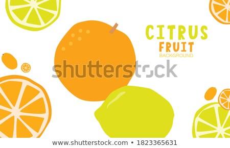 Kumquat Exotic Juicy Fruit Vector Citrus Poster Stock photo © robuart