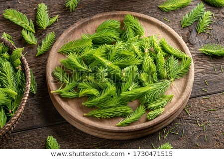 Young spruce tips collected to prepare spruce syrup Stock photo © madeleine_steinbach