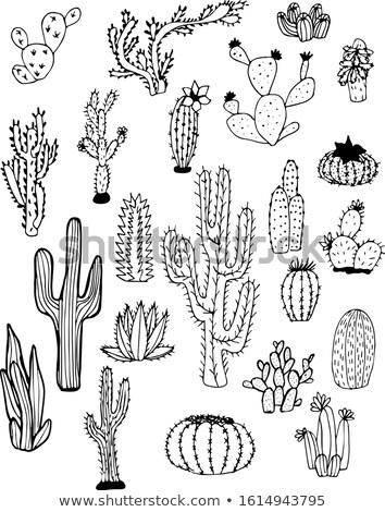 Cute dibujado a mano cactus tarjetas establecer suculento Foto stock © marish
