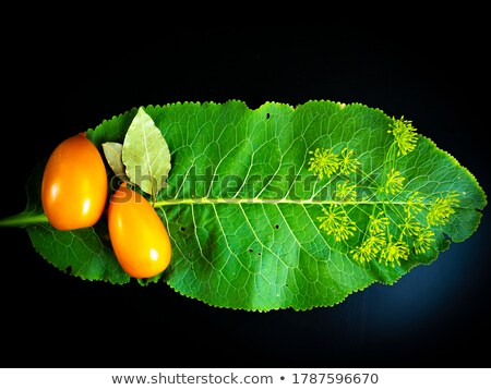 Salatalık turşusu domates şişeler korunmuş Stok fotoğraf © robuart