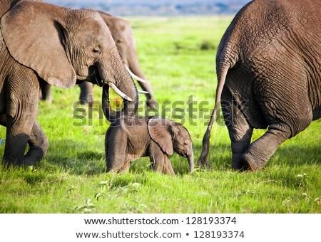 szavanna · tájkép · Afrika · Kenya · növényvilág · fű - stock fotó © photocreo