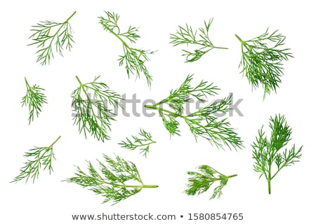 Vers groene voorjaar voedsel keuken Stockfoto © caimacanul