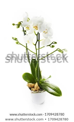 Isolated flower arrangement in a glass vase Stock photo © manfredxy