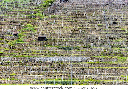 vineyards in early spring in the Wachau area Stock photo © meinzahn