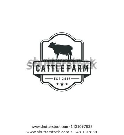 étiquette bovins illustration vecteur maison alimentaire Photo stock © kariiika