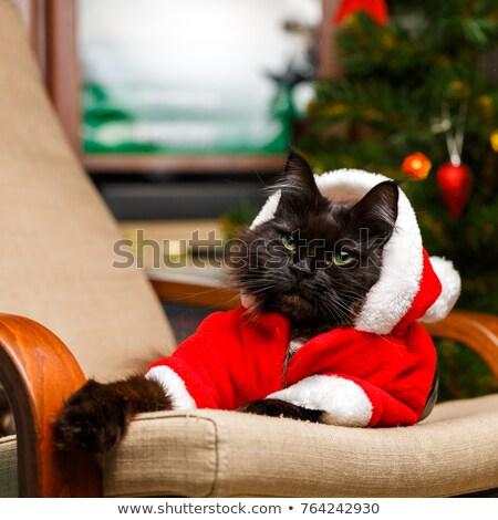 Fotografia nowego rok dar miękkie puszysty Zdjęcia stock © ElenaBatkova