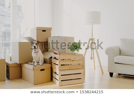 Photo of pedigree cute dog poses on pile of cardboard boxes with owner belongings, relocate in new f Stock photo © vkstudio