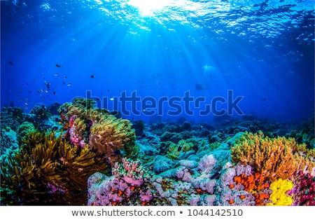 水中 · 世界 · サンゴ礁 · 表示 · 表面 · 水 - ストックフォト © rastudio