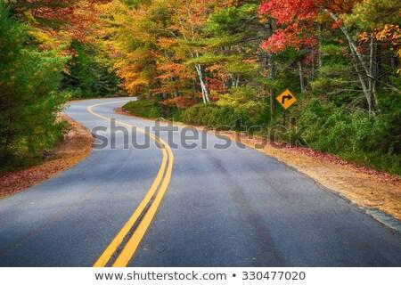 automne · route · coloré · feuillage · bois · arbre - photo stock © stevanovicigor