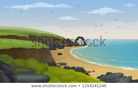 california seagulls at the sandy beach Stock photo © meinzahn