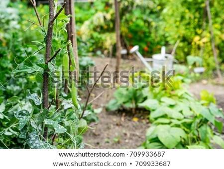 Yeşil bitkiler tırmanmak yukarı durmak can Stok fotoğraf © Klinker