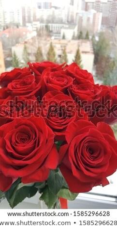 Okno dobre widoku piękna dar charakter Zdjęcia stock © bluering