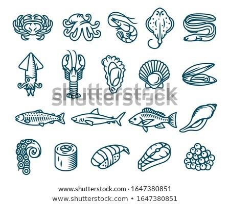 Vektor tengeri hal szett homár osztriga Seattle Stock fotó © netkov1
