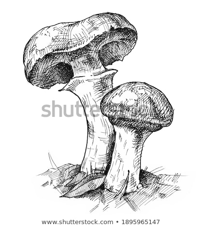 two mushrooms Suillus grows Stock photo © romvo