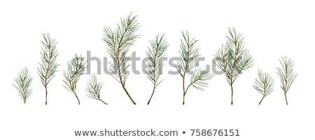 Sammlung Winter Grün Symbole Weihnachten Spielerei Stock foto © marilyna