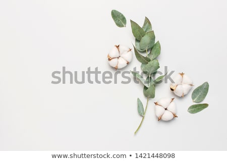 White cotton top Stock photo © RuslanOmega