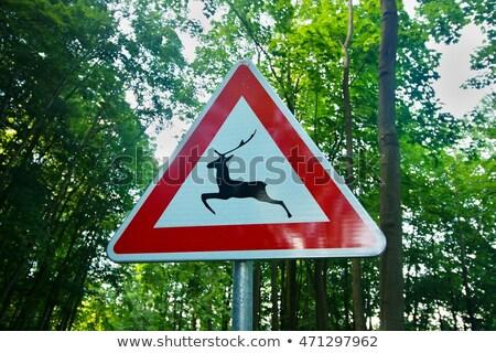 交通標識 · 警告 · 野生動物 · 草 · 森林 - ストックフォト © hraska