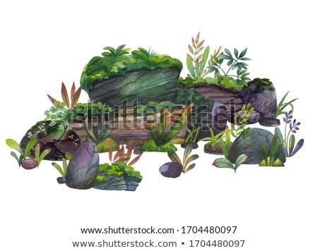 Set of Beatiful Green Nature Landscape Stock photo © colematt
