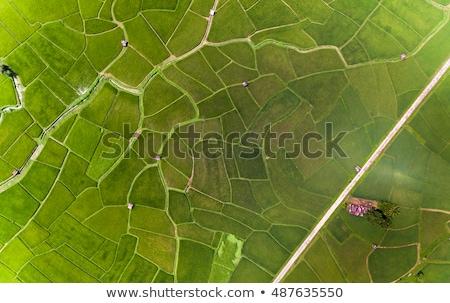Grass meadow, bird eye view.  Stock photo © meinzahn