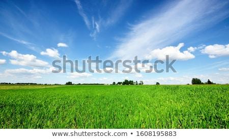 Groene veld blauwe hemel licht wolken voorjaar Stockfoto © alinamd