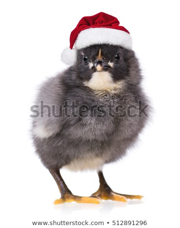 chick with Christmas hat Stock photo © adrenalina