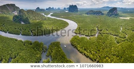 Foresta Thailandia panorama roi parco estate Foto d'archivio © bloodua
