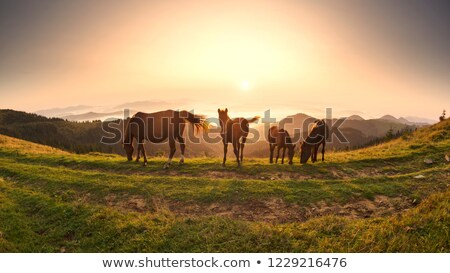 horse in the Carpathians Stock photo © prill