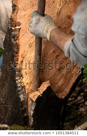 Cork Extraction Stock photo © eldadcarin