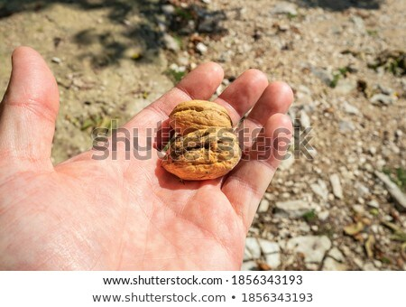 two fingers of human hand holding a nut stock photo © lunamarina