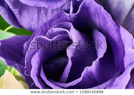 Bloem foto blauwe bloem donkere natuur Stockfoto © MamaMia