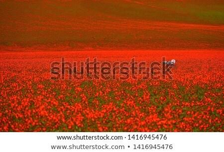 Leżak czerwony maki Francja krajobraz francuski Zdjęcia stock © ivonnewierink