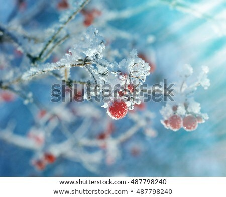 branches covered with ice in winter stock photo © icefront