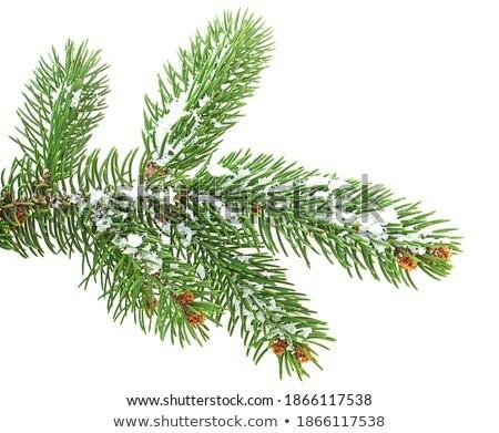 Stockfoto: Sneeuw · gedekt · boom · berk · hout